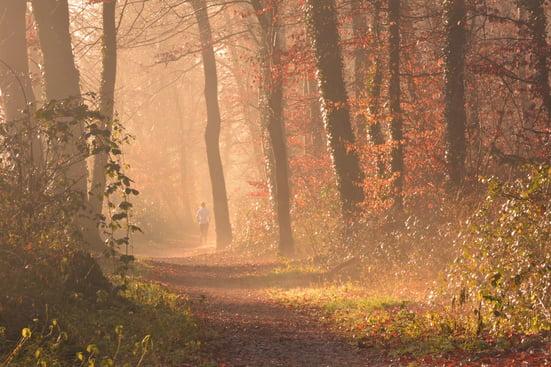autumn-backlit-branch-247477